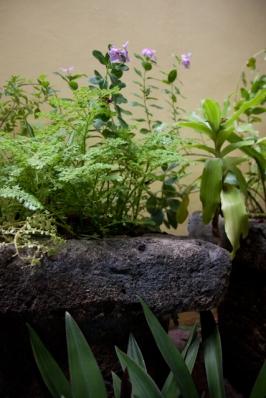 Plants at Lyric